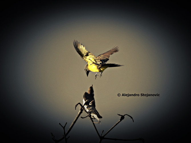 Fotógrafo de Aves ?