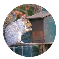 Squirrel Feeder.png