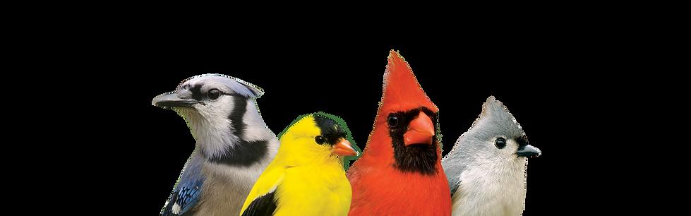 BirdBottom.png