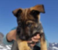 Puppy facesm.jpg