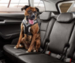 000019409C-dog-safety-belt.jpg