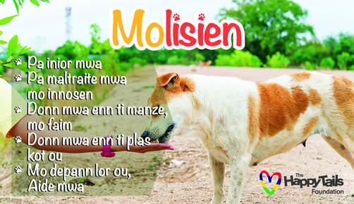 Molisien campaign no.3  & no.4 || WEEKEND DIMANCHE