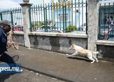 MSAW will not kill stray dogs any more!