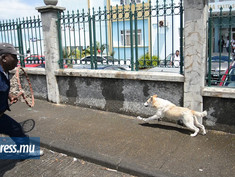 MSAW will not kill stray dogs any more!