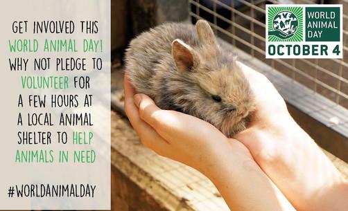 WORLD ANIMAL DAY || DO SOMETHING!