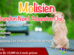 """Our """"Molisien"""" campaign begins in the local Sunday Paper 