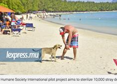 Awareness raising: HSI will sterilise 10,000 stray dogs! oh oh :/