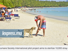 Awareness raising: HSI will sterilise 10,000 stray dogs! oh oh :/