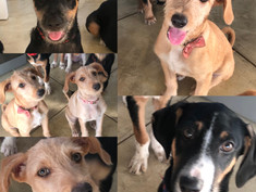 ADOPTED!!! || Our beloved puppies