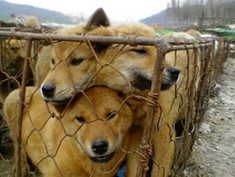 Happy News || Killing dogs for meat is now illegal in South Korea