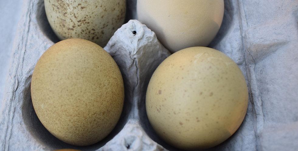 Speckled Olive Egger (1/2 Dozen)