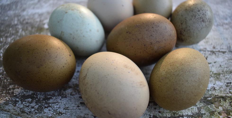 Speckled Olive Egger (Dozen)