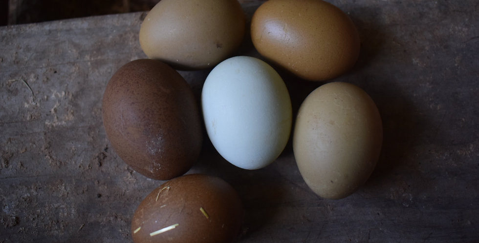 Frizzled Olive and Easter Egger (1/2 Dozen)