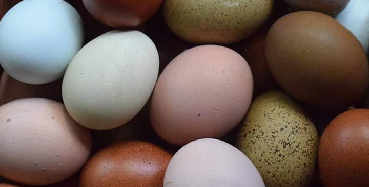 Rainbow Hatching Eggs (Dozen)