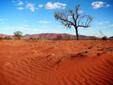 Patrick White | Uma chama no deserto