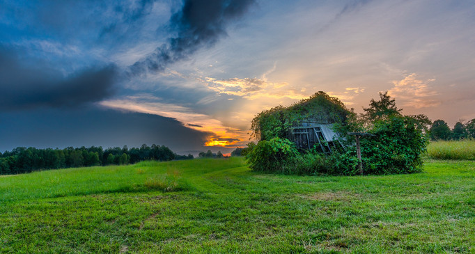 Ivy Covered Barn at Sunset