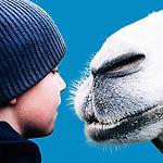 www film preview Мой друг северный вер
