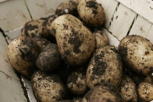 King Edward Potato (UK)