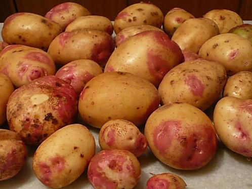 Organic Maris Piper Potato (UK)