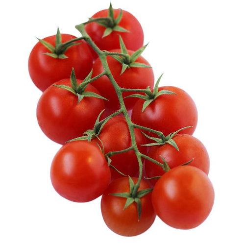 Organic Tomatoes on the vine (Spain)