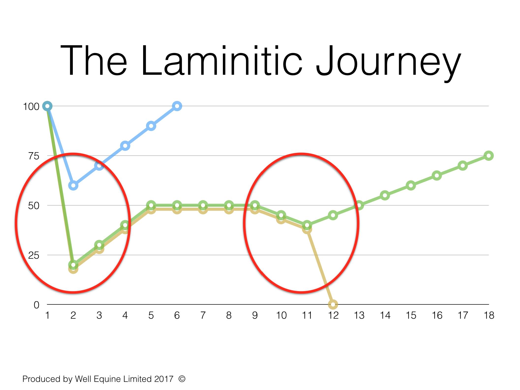 Laminitic Jouney