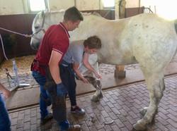 Well Equine Ltd © ABC Romania