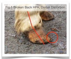 Hoof Distortion