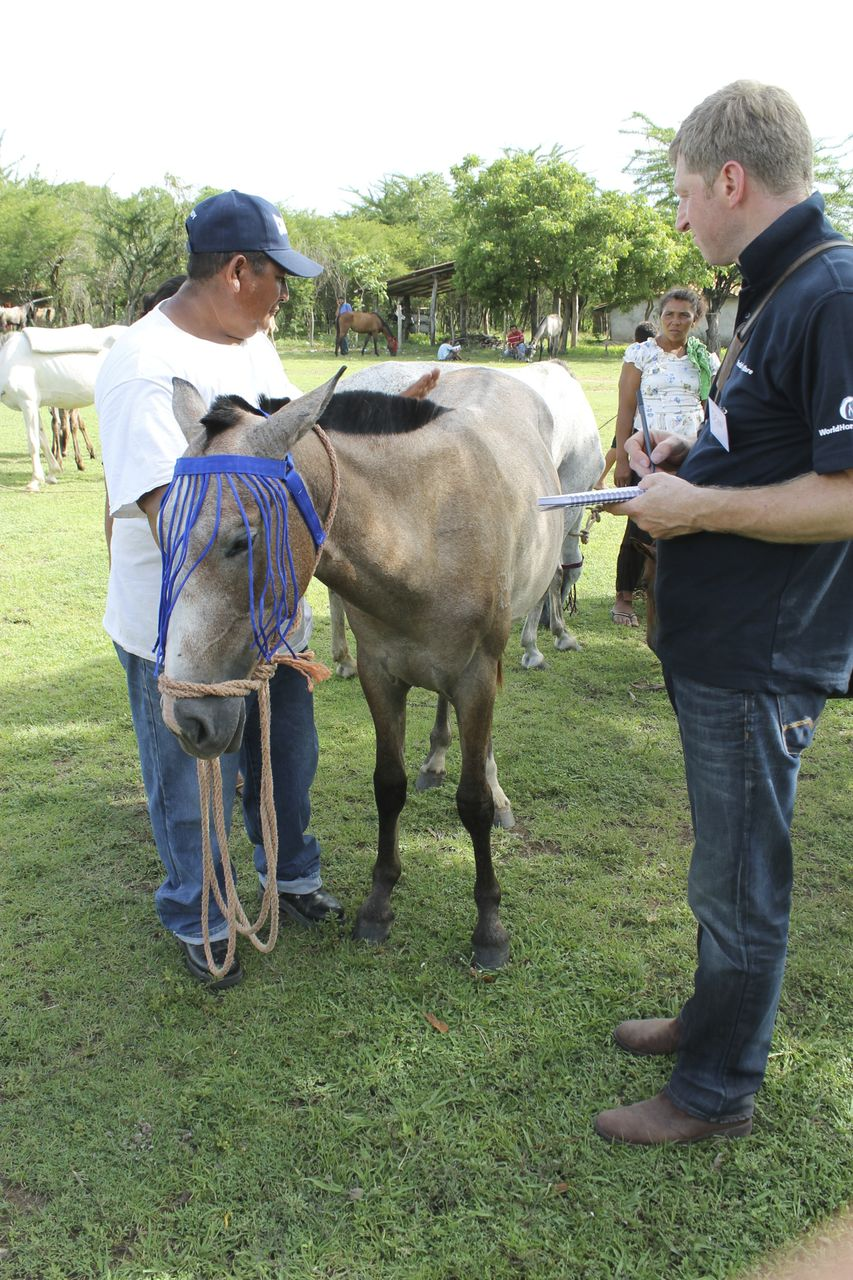 Equine Welfare Research WHW Honduras
