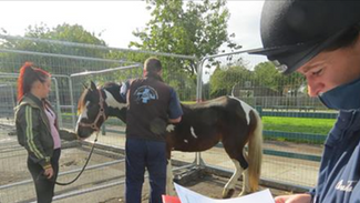 Equine Health Clinics 2016