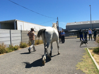 "Farrier Training South Africa 2015   ""Opportunities For Welfare and Wellbeing"""