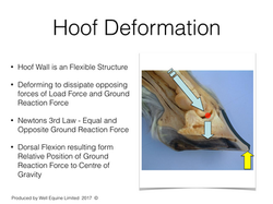 Hoof Deformation