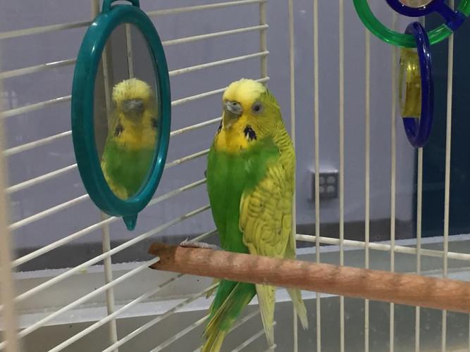 Office Birdie!