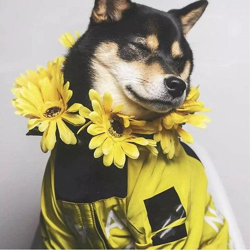 Dog Raincoat Jacket  Windproof Cat Dog Waterproof Reflective Pet Clothing Large
