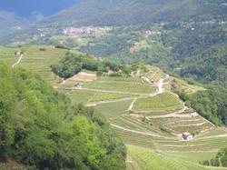 Vinařská oblast Val di Cembro