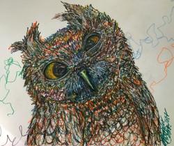 Owl Eyeballing You