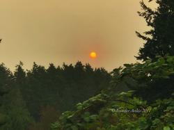 Veiled Sunrise