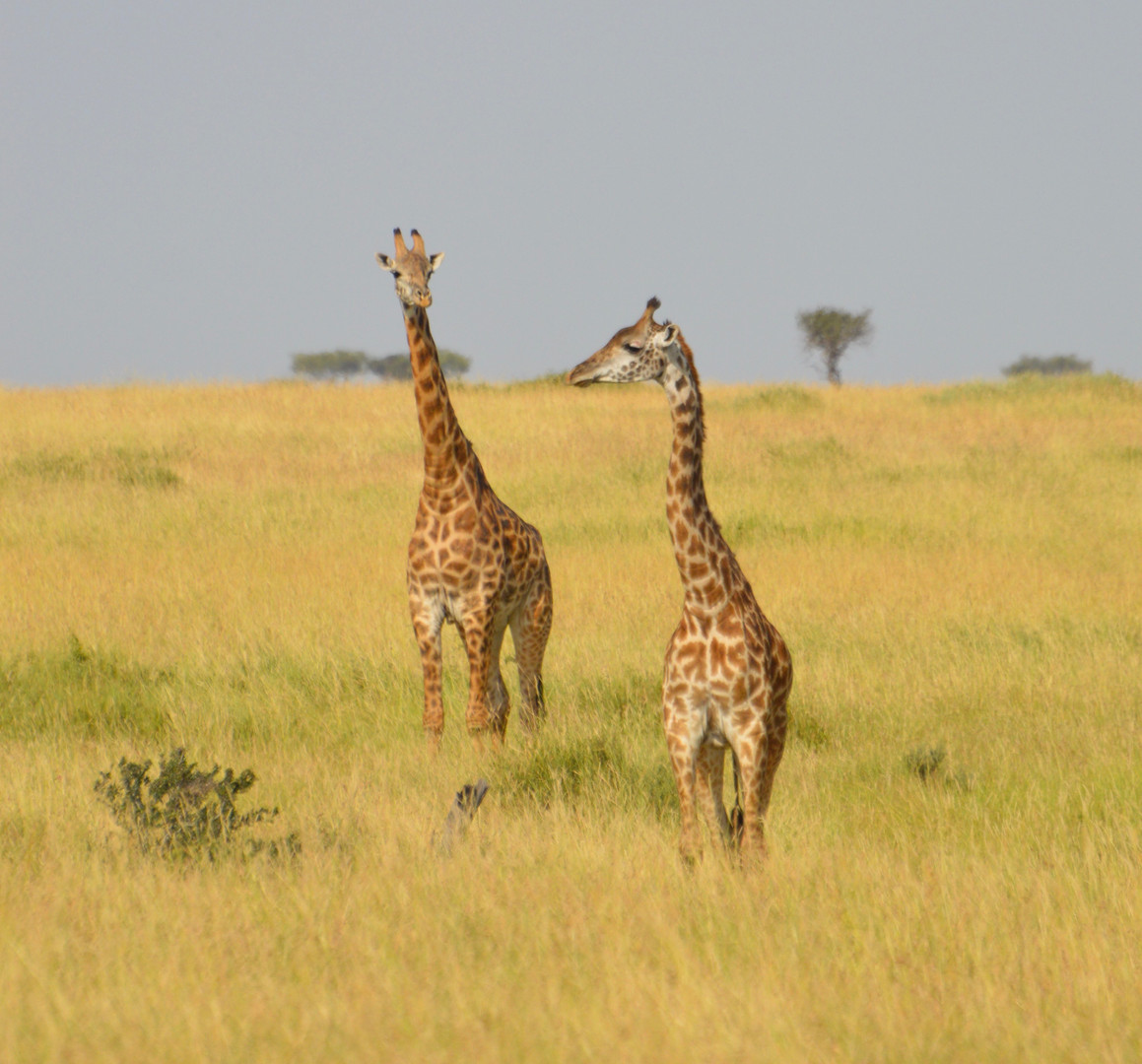 Kenya 2 640 (2).jpg
