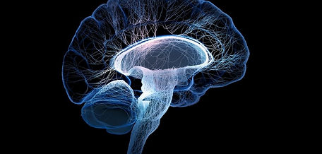 neurogenesis in the amuygdala of mice.jp