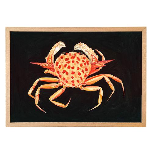 Gladiator box crab