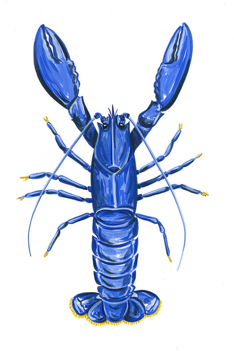 Blue American Lobster