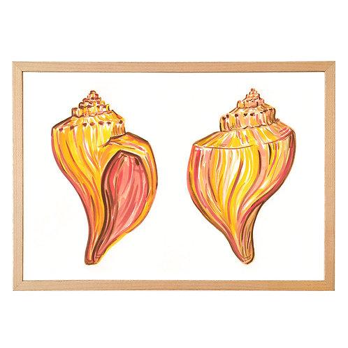 Conch sea shell