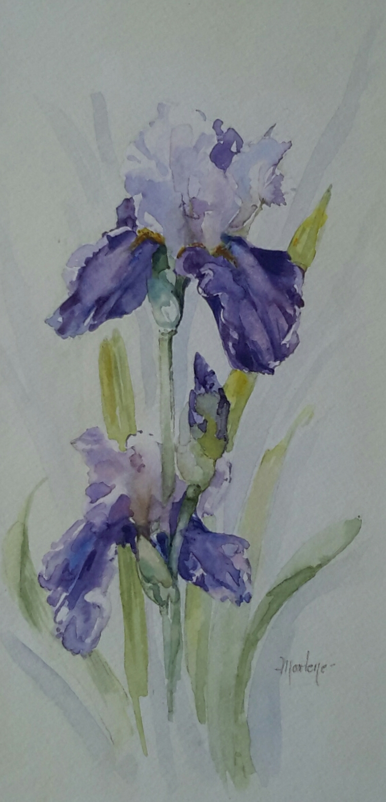 Watercolour Iris