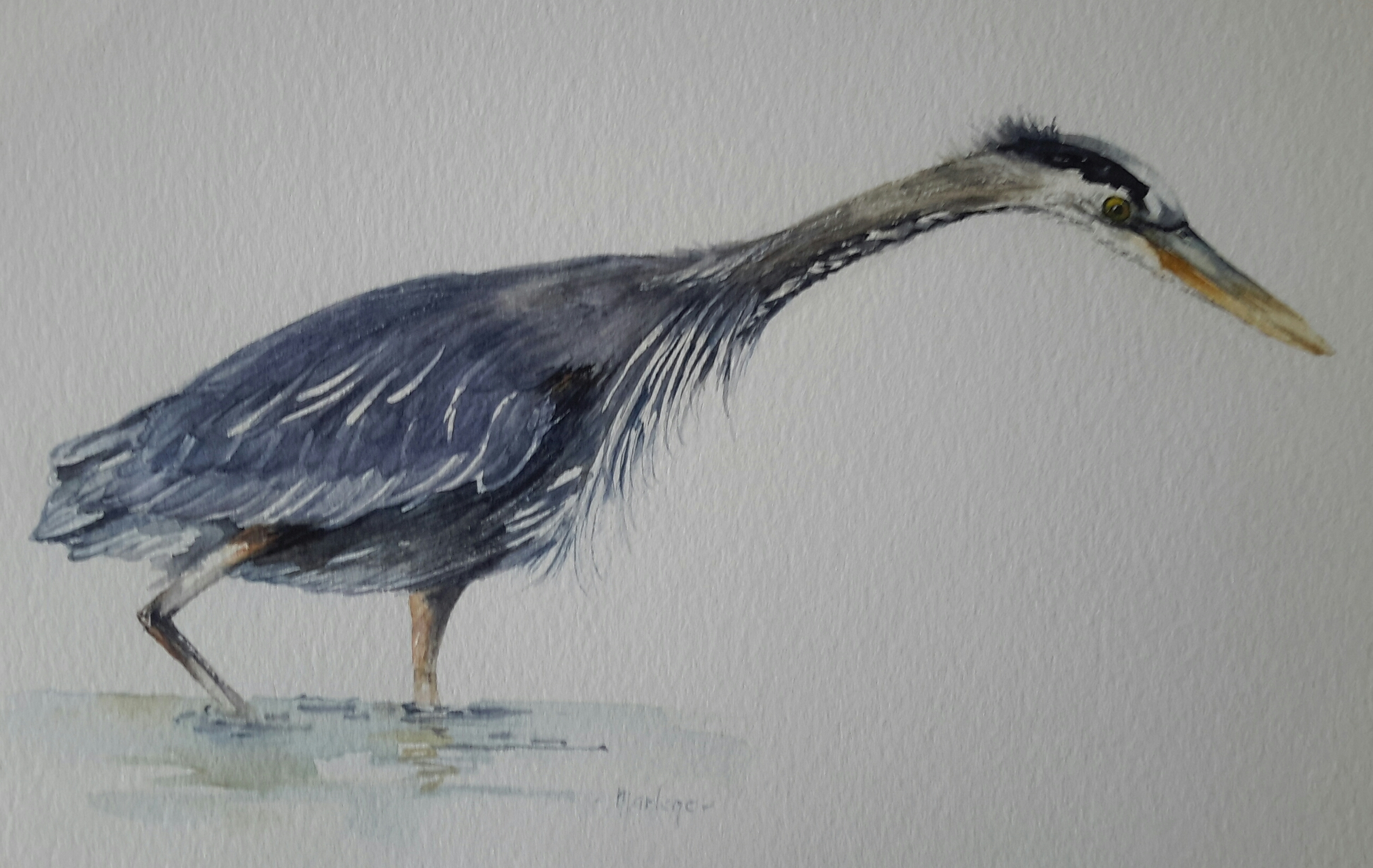 Watercolour Blue Heron