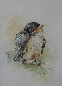 Watercolour Sleepy Bird