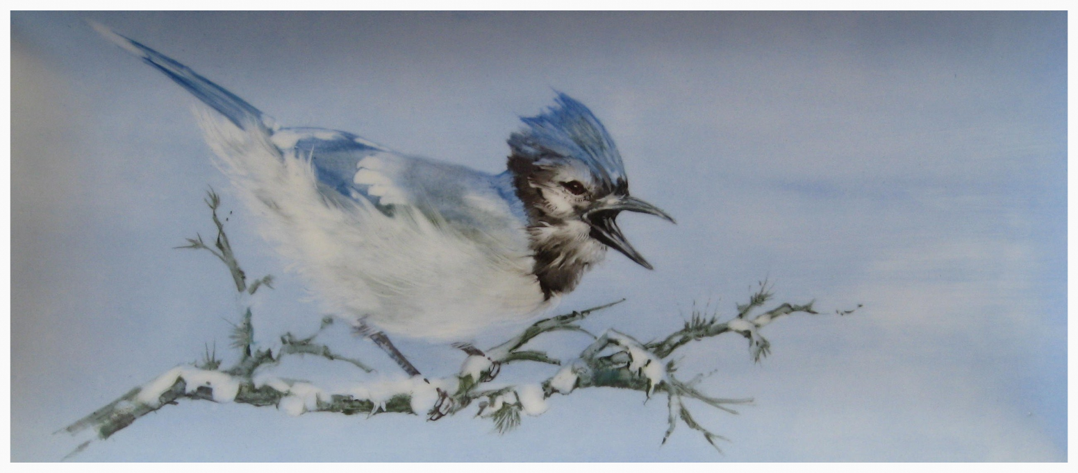 Bluejay with Snow