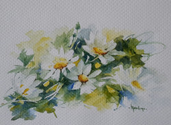 Watercolour Daisies