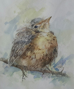 Watercolour Fluffy Bird