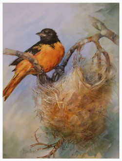 Baltimore Oriole with Nest
