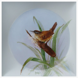 Carolina Wren with Cattail