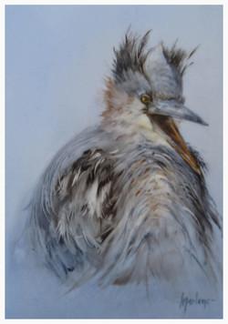 Juvenile Blue Heron